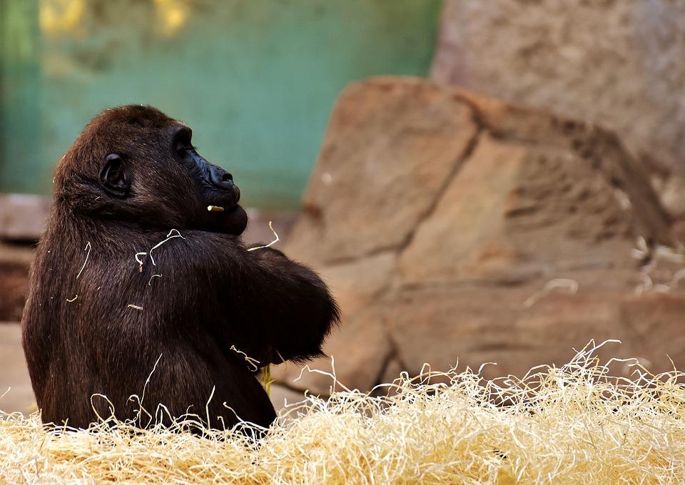 Ubuntu 20.10 Groovy Gorilla Release Schedule