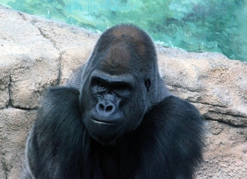 Ubuntu 20.10 Groovy Gorilla Download